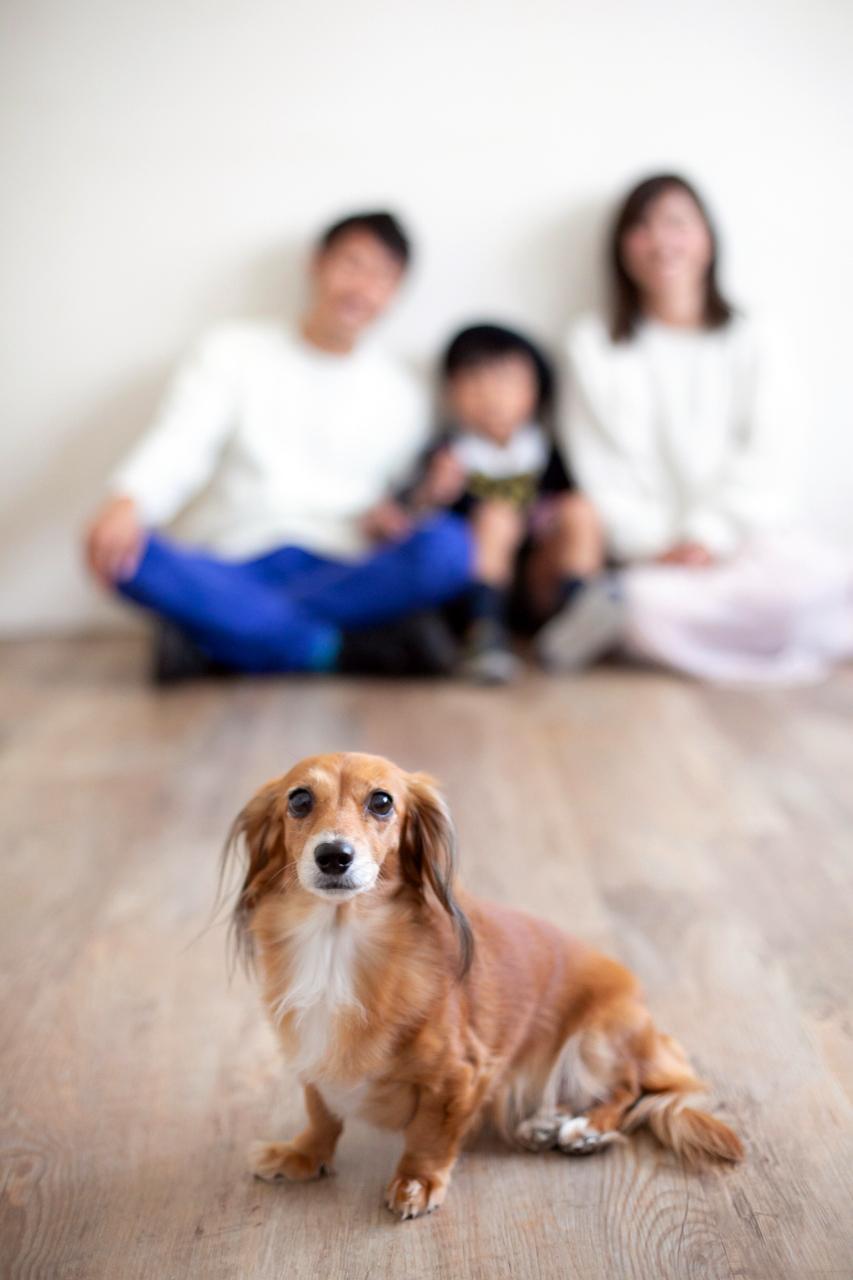 愛犬と一緒に家族写真撮影