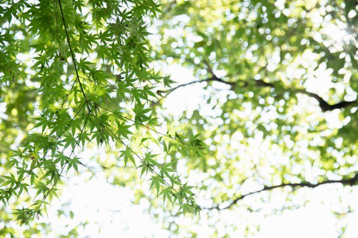 出張撮影,琴平神社,お宮参り,緑いっぱい