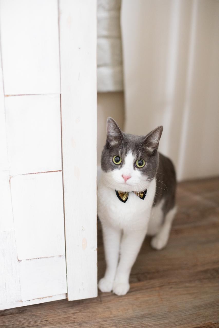 猫ちゃんと前撮り撮影,猫ちゃんと一緒に