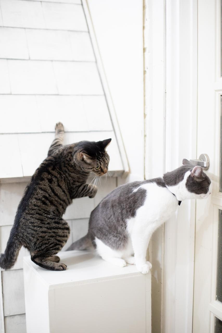 猫ちゃんと前撮り撮影