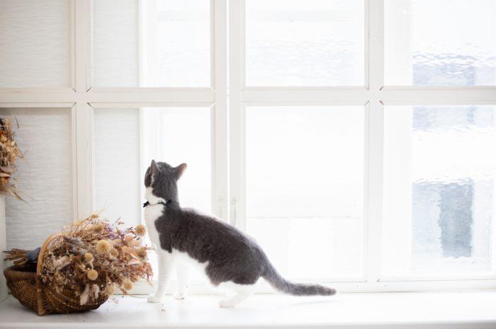 猫ちゃんと前撮り