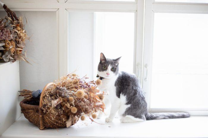 猫ちゃんとフォトウエディング撮影